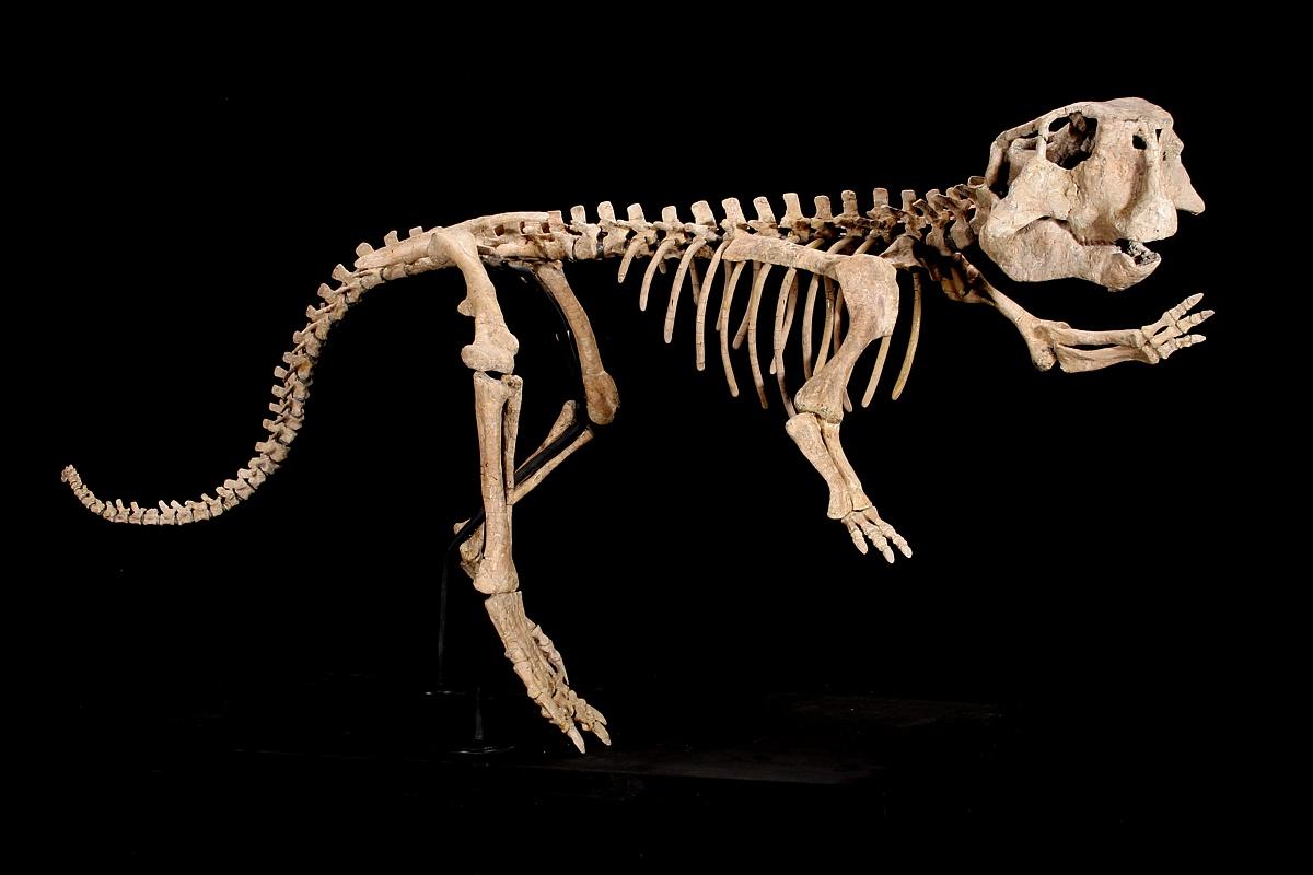 Displaying 19> Images For - Skeleton Sitting At Desk