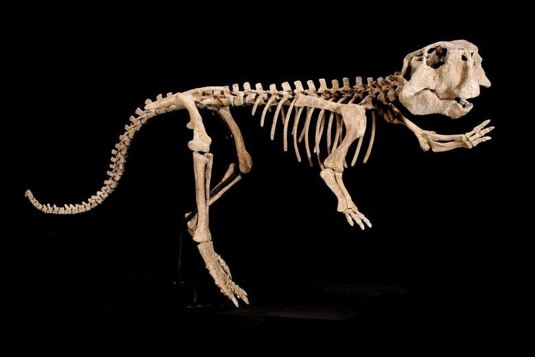 dinosaur-skeleton-psittacosaurus-1